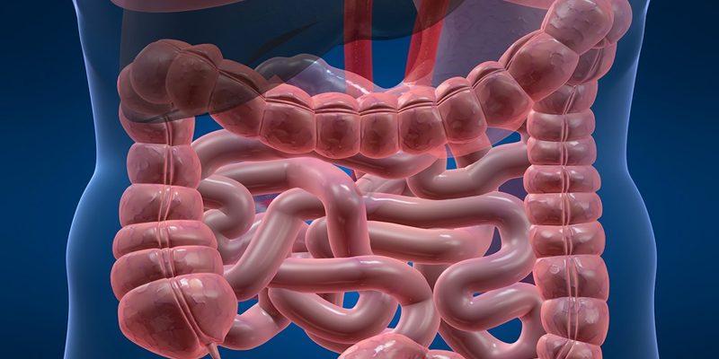 Comment nos bactéries intestinales influencent-elles notre cerveau ?